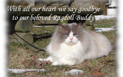 Kater Buddy overleden.