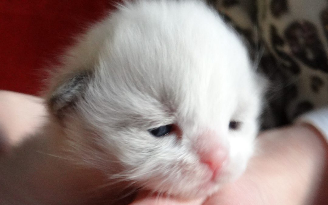 De kittens van Muse & Buddy update 1