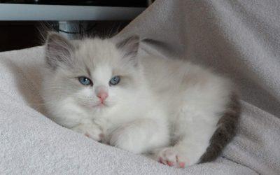 Kitten update van 19 maart.