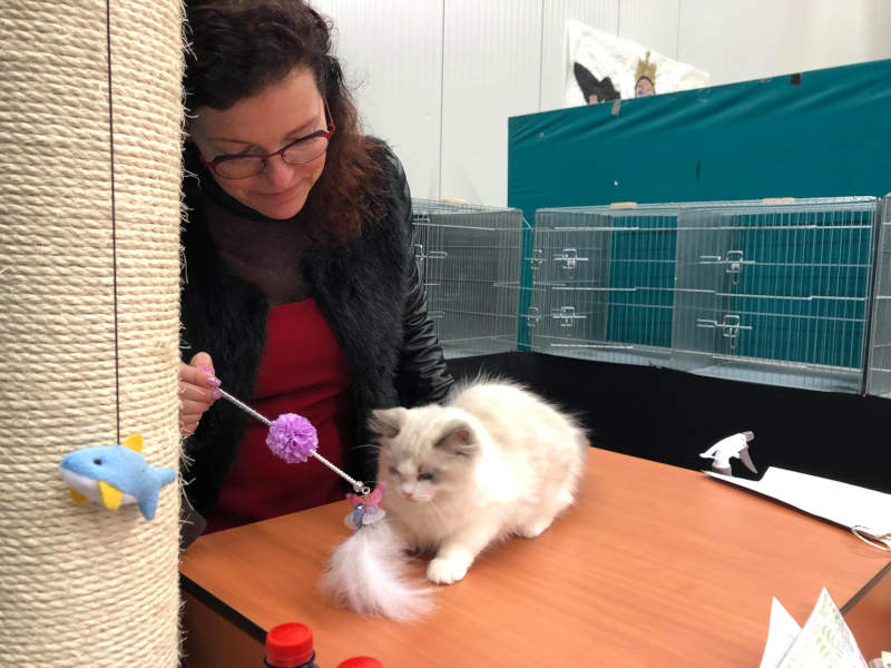 Cattery update van 24 april 2019