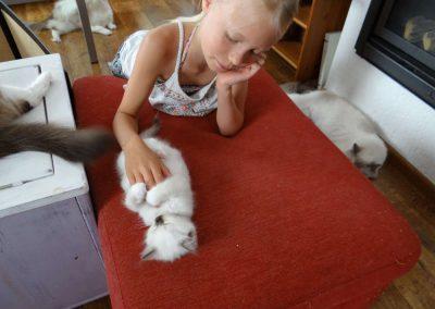 Kinderen helpen hier de kittens te socialiseren.