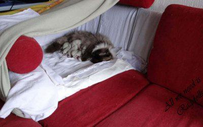 De Valentijn kittens zijn alweer één week.